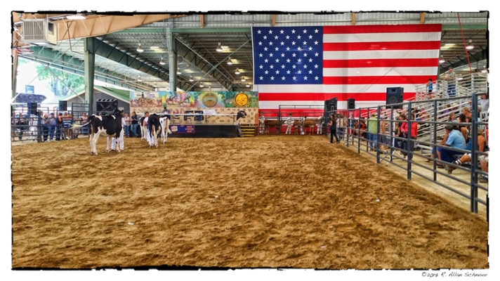 #statefair, #americanflag,#heifers, #cowboys,#ranchers